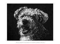 "Canine Scratchboard XXV by Julie Chapman - 13"" x 10"""