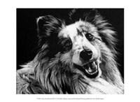 """Canine Scratchboard XXVI by Julie Chapman - 13"""" x 10"""""""