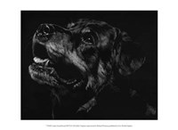 """Canine Scratchboard XXVII by Julie Chapman - 13"""" x 10"""""""