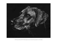"""Canine Scratchboard XXVIII by Julie Chapman - 13"""" x 10"""""""