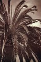 Whispering Palm Fine Art Print