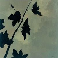 Blossoms I Fine Art Print