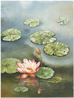 "Water Lily With Pink Blossom by W. Cullen - 30"" x 40"", FulcrumGallery.com brand"