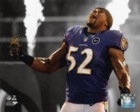 Ray Lewis 2012 Spotlight Action Framed Print