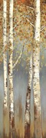 Butterscotch Birch Trees I Fine Art Print