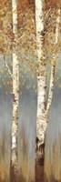 Butterscotch Birch Trees II Fine Art Print