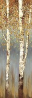 Butterscotch Birch Trees II Fine Art Print