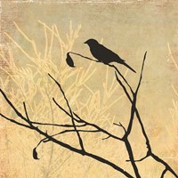 Perched Fine Art Print
