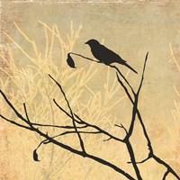 Perched Fine Art Print