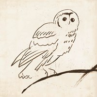 Owl II Fine Art Print