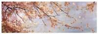 """Osaka Blossoms II by Asia Jensen - 37"""" x 13"""""""
