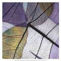 Purple and Grey Leaves II Fine Art Print