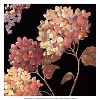 Velvet Hydrangeas I - Mini Fine Art Print