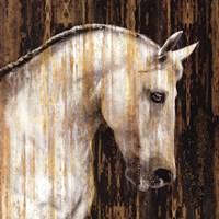 Horse II Framed Print