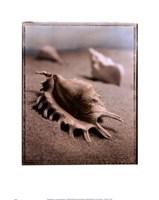 Seashell III Fine Art Print