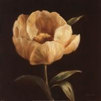 Floral Symposium I Fine Art Print