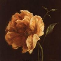 Floral Symposium II Fine Art Print