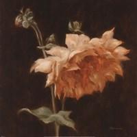 Floral Symposium III Fine Art Print