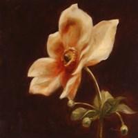 Floral Symposium IV Fine Art Print