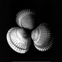 Shell Collection I Fine Art Print