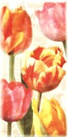 Glowing Tulips II Fine Art Print