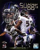 Terrell Suggs 2013 Portrait Plus Fine Art Print