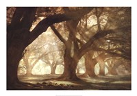 Oak Alley Morning Light Fine Art Print