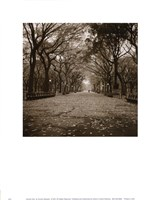 "Central Park by Sondra Wampler - 11"" x 14"" - $9.99"