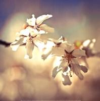 "Soft Bloom I by Assaf Frank - 14"" x 14"", FulcrumGallery.com brand"