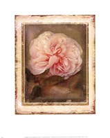 """CABBAGE ROSES by Linda Maron - 11"""" x 14"""""""