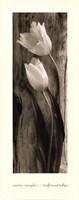 Driftwood Tulips Fine Art Print