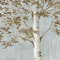 "Birch Study I by Daphne Brissonnet - 12"" x 12"", FulcrumGallery.com brand"