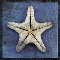 Armored Starfish Underside Framed Print