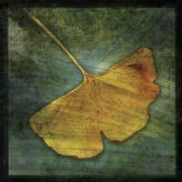 "Gingko 3 by John W. Golden - 12"" x 12"" - $12.99"