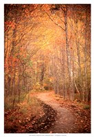 Winding Autumn Path Fine Art Print