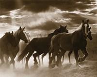 Running Horses & Sunbeams
