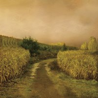 Sunset Cornfield Fine Art Print