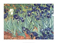 "Irises in the Garden by Vincent Van Gogh - 32"" x 24"""