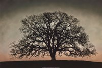 "Majestic Oak by David Lorenz Winston - 30"" x 20"""