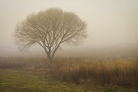 Tree in Field Fine Art Print