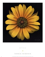 Bliss Fine Art Print