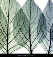 Celosia Leaves II Fine Art Print