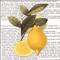 Citrus Edition I Fine Art Print