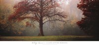 A Late Autumn Morning Fine Art Print