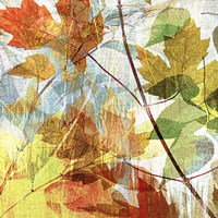 """Thicket I Left by John Butler - 24"""" x 24"""" - $23.99"""