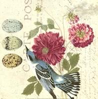 Bird Study 4 Fine Art Print