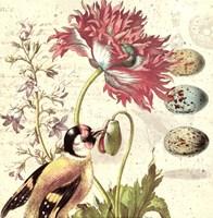Bird Study 2 Fine Art Print