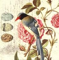 """Bird Study 1 by Paula Scaletta - 12"""" x 12"""""""