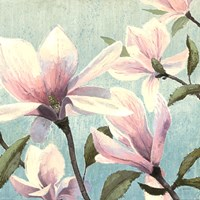 "Southern Blossoms I Square by James Wiens - 24"" x 24"""