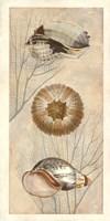 Ocean Companions II Fine Art Print